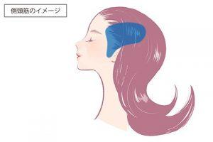 側頭筋イメージ